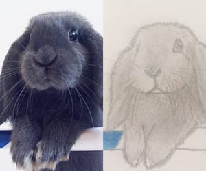 bunny, sketch, and drawing image