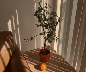 aesthetic, plants, and orange image