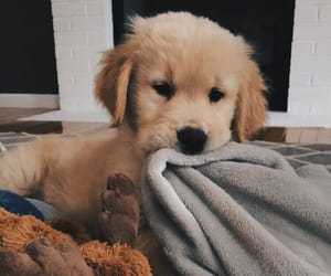 animal, cozy, and puppy image