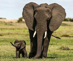 elephant and baby elephant image