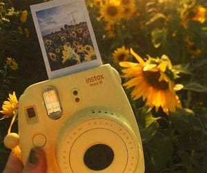 aesthetic, camera, and sunflowers image