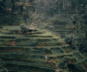 asie, bali, and landscape image