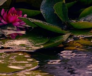 gif, lotus, and rain image