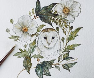 flowers and owl image