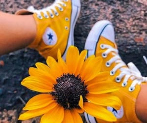 all star, flowers, and nature image