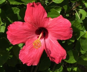flower, pink, and tropical image