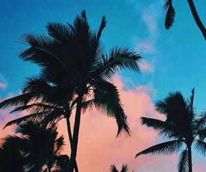 blue, palm trees, and wallpaper image