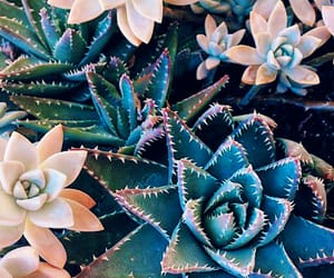 succulent, plants, and pretty image
