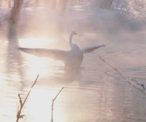Swan, theme, and aesthetic image