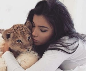 aesthetic, cat, and lion image