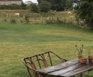 animals, greenery, and outdoors image