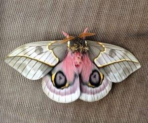 moth, animal, and beautiful image