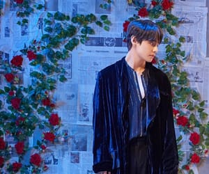 aesthetic, roses, and v image