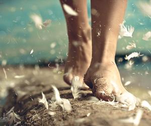 feather, feet, and photography image
