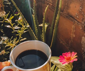 bloom, coffe, and morning image