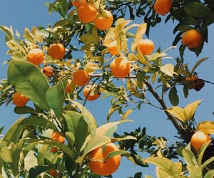orange, fruit, and nature image