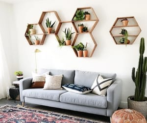 cactus, comfort, and decor image