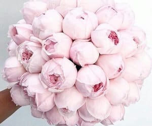 pink, flowers, and bouquet image