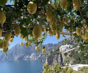 lemon, nature, and summer image