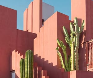 pink, cactus, and architecture image