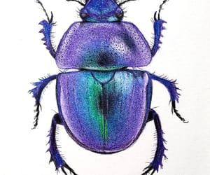 beetle, biology, and Bristol image