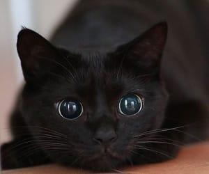 cat, animal, and black image