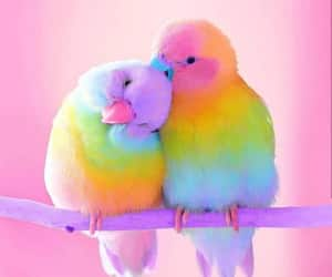 bird, animal, and rainbow image