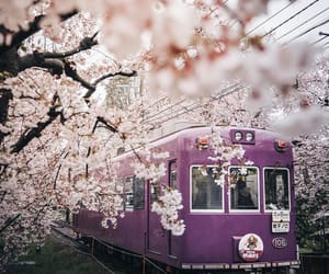 adventure, cherry blossoms, and culture image