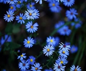 blue, flowers, and cute image