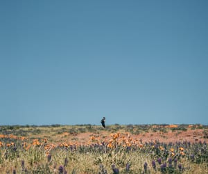 floral, flowers, and hiker image