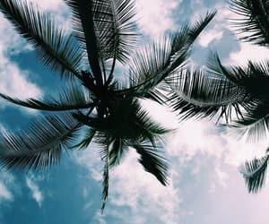 sky, palm trees, and blue image