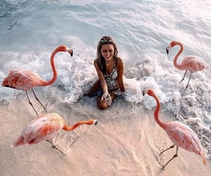 beach, girl, and flamingo image