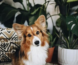 plants, pretty, and puppiee image