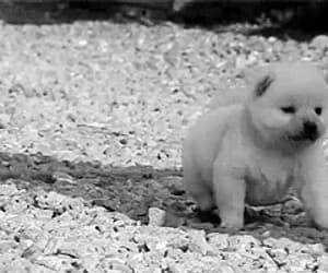 adorable, gif, and animal image