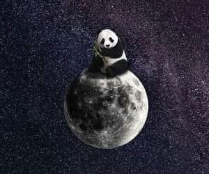 panda and moon image