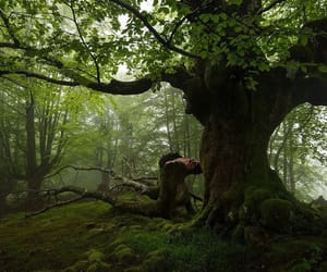 ancient, moss, and trees image