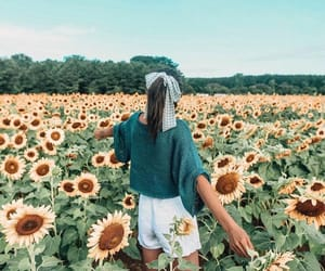 sunflowers and tumblr image