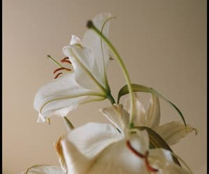 beige, floral, and flowers image