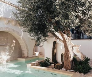 pool, summer, and tree image