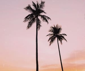 beauty, palms, and summer image
