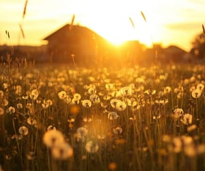flowers, dandelion, and sun image