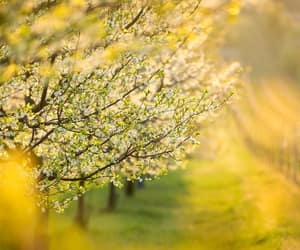 blossom, nature, and spring image
