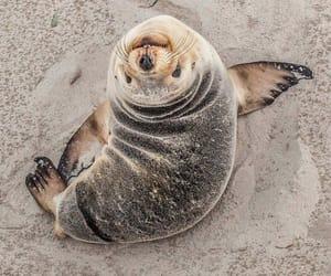 animal, seal, and beach image