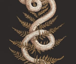 snake and wallpaper image
