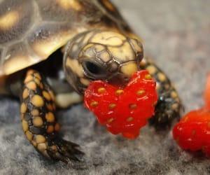 turtle, heart, and animal image