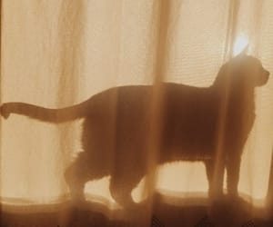 cat, aesthetic, and brown image