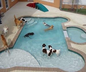 dog and pool image