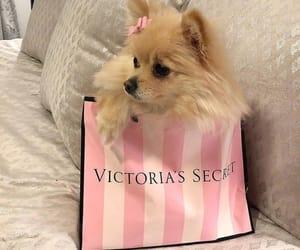 animals, victoria secret, and adorable image