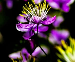 flora, nature, and purple image