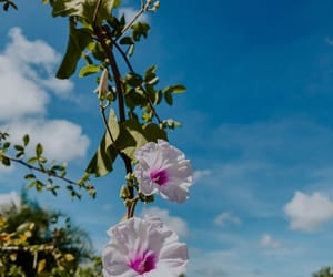 flowers, nature, and céu image